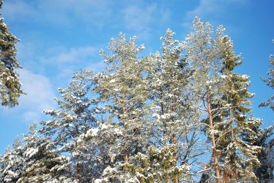 vinter vitt krispigt